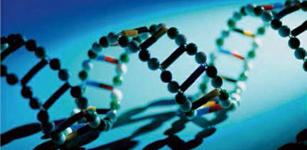 管理的本质之文化基因